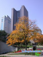 Tree outside the State House showing fall colors in downtown Columbus, Ohio